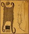 De quibusdam animalibus marinis, eorumque proprietatibus, orbi litterario vel nondum vel minus notis, liber - cum nonnullis tabulis aeri incisis, ab auctore super vivis animalibus delineatis (1761) (20237519534).jpg