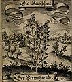 Der Fruchtbringenden Geselschaft Nahmen, Vorhaben, Gemählde und Wörter - nach jedes Einnahme ordentlich in Kupfer gestochen, und in achtzeilige Reimgesetze verfasset (1646) (14723832926).jpg