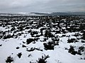 Derwent Moors in the snow - geograph.org.uk - 323159.jpg