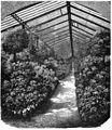 Die Gartenlaube (1859) b 068.jpg