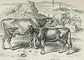Die Thierzucht (1886) (20326011384).jpg