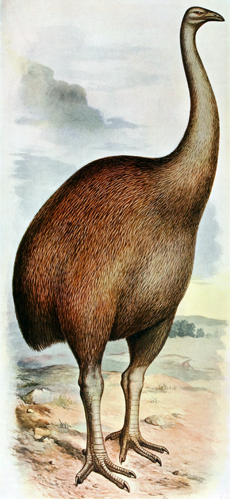 North Island giant moa - Restoration by Frohawk