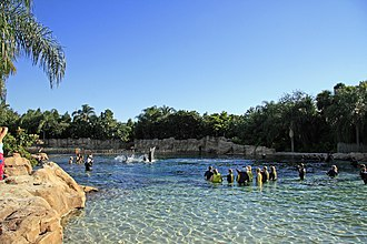 Discovery Cove - Image: Disccove Dolphin