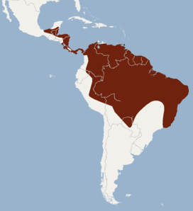 Distribution of Lophostoma brasiliense.png