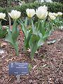 Dixon Gardens Memphis TN 2014-04-06 157.jpg