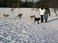 Dogs and people in snowy dog park.jpg