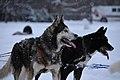 Dogsled (5403502096).jpg