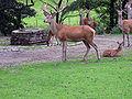 Dortmund-Zoo-IMG 5538-a.jpg