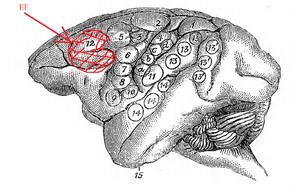Supplementary eye field - Image: Dr. David Ferrier's Original Eye Field Brain Map in Monkeys