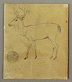 Drawing, A Standing Stag, ca. 1850 (CH 18192603).jpg