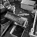 Druiventrossen worden in een ontsteler geschept alvorens ze worden geperst, Bestanddeelnr 254-4213.jpg