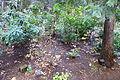 Dunsmuir Botanical Gardens - DSC02916.JPG