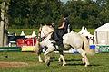 Duo de cavalières mondial du cheval percheron 2011Cl J Weber06 (23455235644).jpg