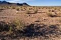 East of Steins Peak - Flickr - aspidoscelis (3).jpg
