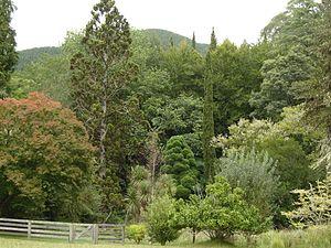 Eastwoodhill Arboretum - Trees in Eastwoodhill Arboretum