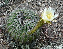 Click Here for cacti