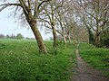 Edge of Primrose Hill park - geograph.org.uk - 784344.jpg