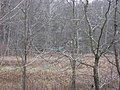 Elm Spring Farm fields.jpg