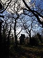Epping Forest 20180125 150021 (49374752837).jpg