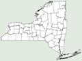 Erigeron strigosus var beyrichii NY-dist-map.png