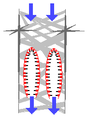 Euplectella 01.png