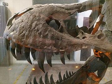 Fóssil de crânio de Tyrannosaurus rex (detalhe).jpg