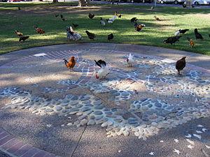 Fair Oaks, California - Chickens running free in Fair Oaks village