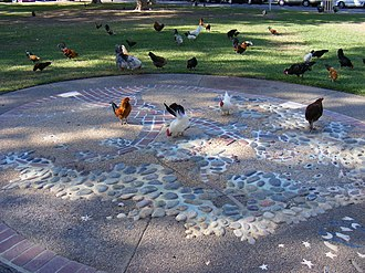 Fair Oaks, California - Chickens running free in Fair Oaks village