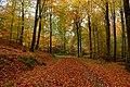 Fall - panoramio (16).jpg