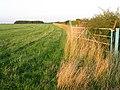 Farmland alongside Sewstern Lane - geograph.org.uk - 38296.jpg