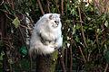 Fat Cat (5428291159).jpg