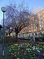 February blossom, arbre en fleurs, Paris, février 2016 (24784285661).jpg