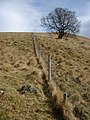 Fence on the SW slope of Meall Cala - geograph.org.uk - 132597.jpg