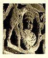 Fig 146a - Mausoleum - Friesdetail Siehe Seite 113 ff.jpg