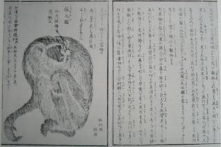 テナガザルの画像 p1_35
