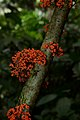 Flickr - ggallice - Fruits.jpg