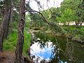 Flickr - ronsaunders47 - A pond in Lesbos, Greece..jpg