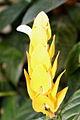 Flor-Camarão.JPG