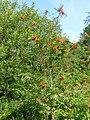 FloraLisburnJune2015 (9).JPG