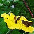 Flower123456.jpg