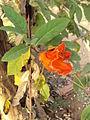 Flower 33.JPG