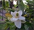 Flowers (7014747939).jpg