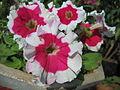 Flowers (71).JPG