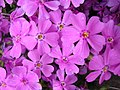 Flowers - Flickr - eliduke (3).jpg