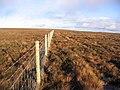 Following a moorland fence - geograph.org.uk - 290482.jpg