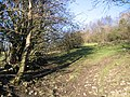 Footpath and Hedge - geograph.org.uk - 349657.jpg