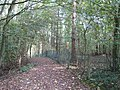 Footpath in Brown's Coppice - geograph.org.uk - 582322.jpg