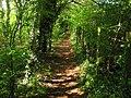 Footpath in Paxwood - geograph.org.uk - 1280459.jpg