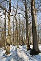 Forêt départementale de Beauplan sous la neige 2012 17.jpg