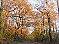 Forêt de Mervent-Vouvant.jpg